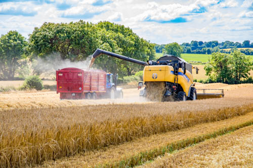 The European grain harvest is producing a bumper crop of wheat and barley.